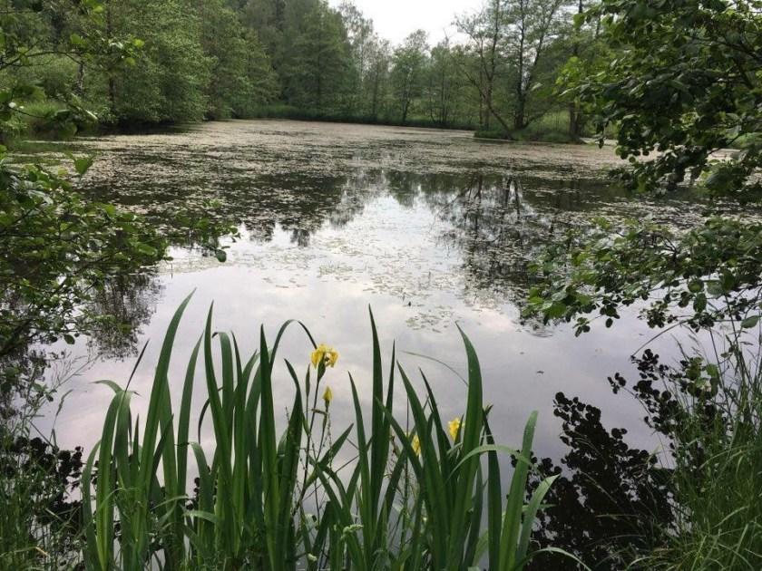 Spessart Südhessen Wanderung Teich
