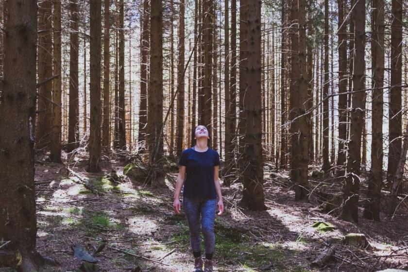 Harz mystisch wald sonnenstrahlen reiseblog