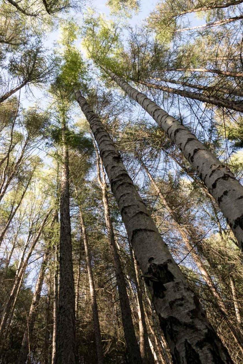 Harz Wald Bäume