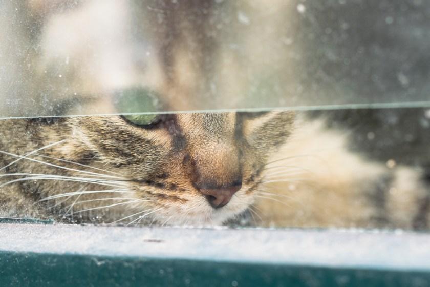 utrecht katze fenster
