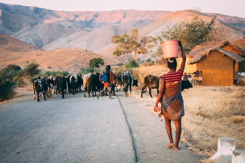 madagaskar zebus dorf straße berge merina
