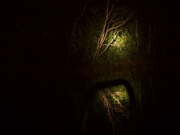night spotting