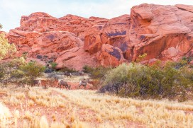043 Valley of Fire
