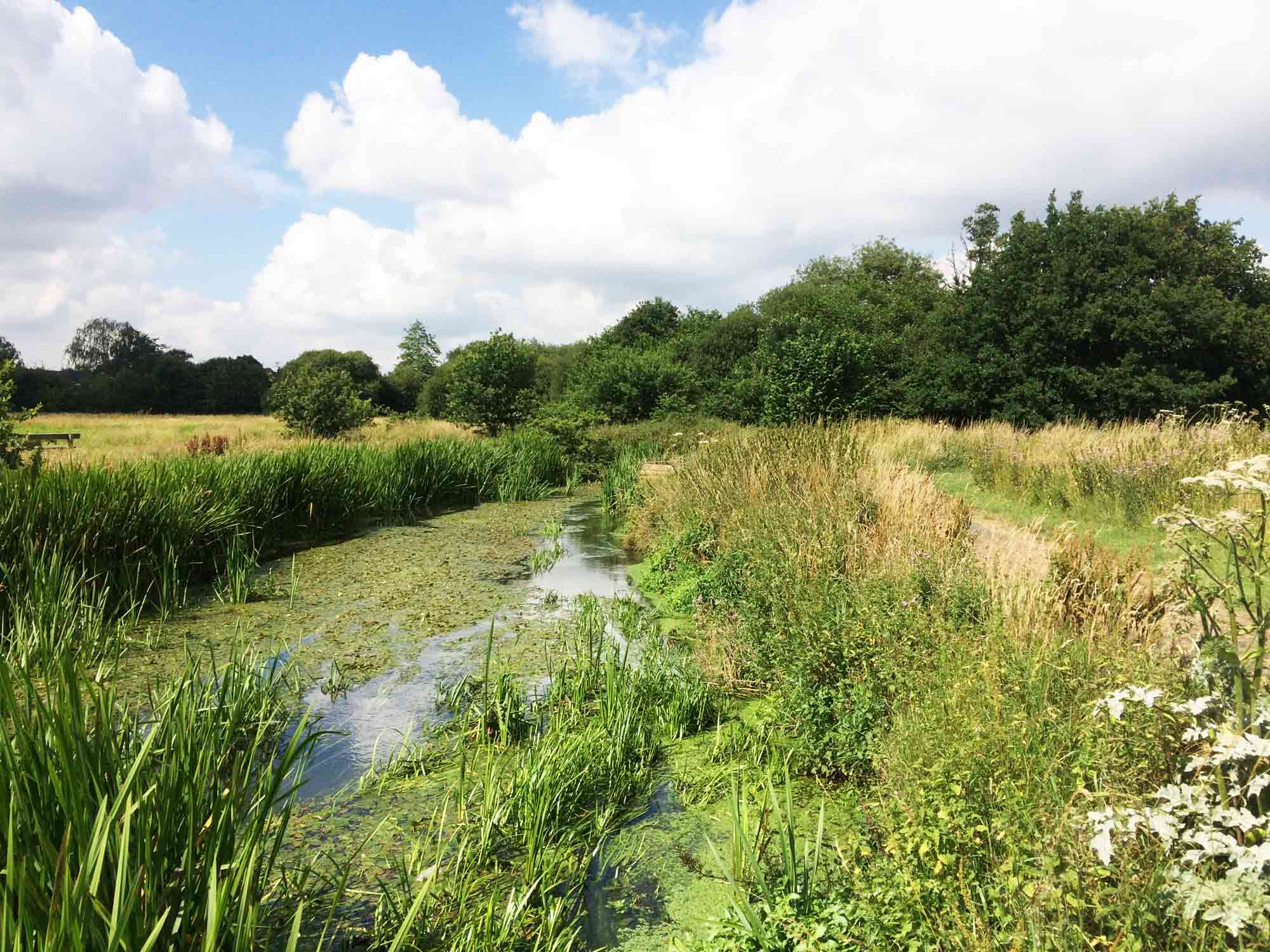 Shepherd Meadows, Sandhurst