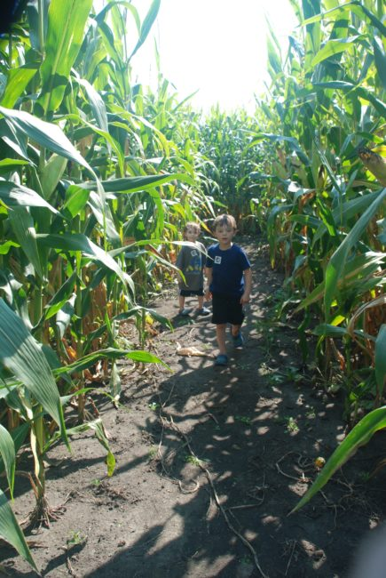 Corn Maze at All Seasons Apple Orchard