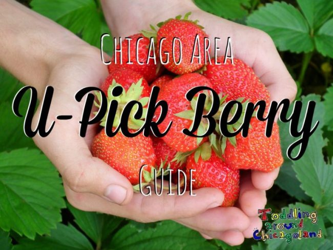 Chicago Area U-Pick Berry Guide - Toddling Around Chicagoland
