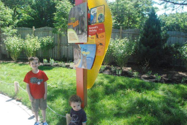 Wild Encounters at Brookfield Zoo - wallaby habitat