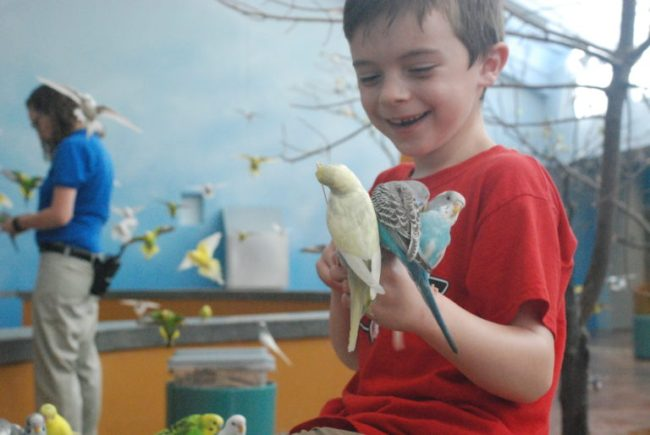 Wild Encounters at Brookfield Zoo - Cooper with parakeets