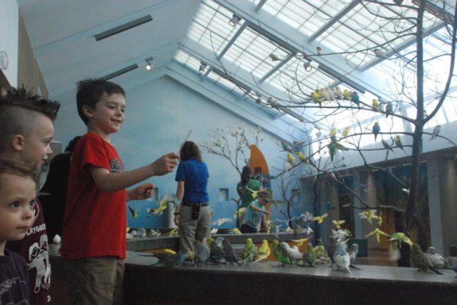 Wild Encounters at Brookfield Zoo - parakeets