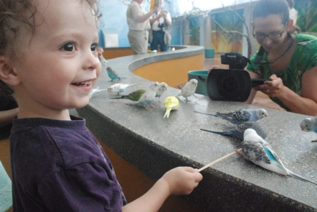 Wild Encounters at Brookfield Zoo - Campbell with parakeets
