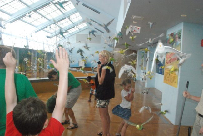 Wild Encounters at Brookfield Zoo - parakeets flying