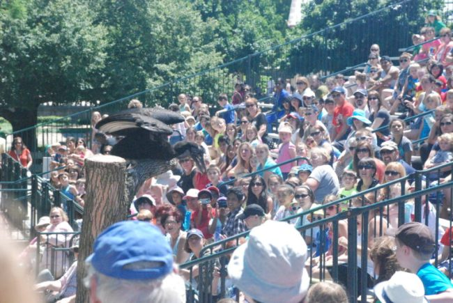 Brookfield Zoo Festival of Flight - audience