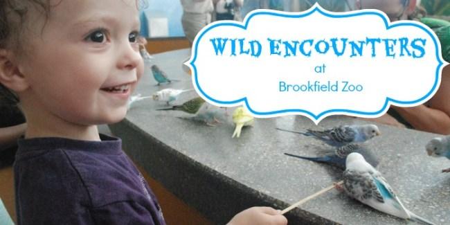 Wild Encounters at Brookfield Zoo - slider