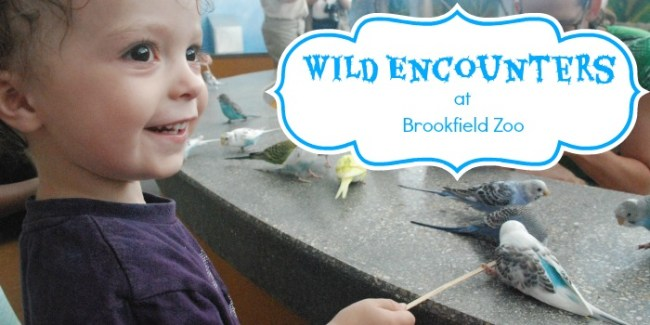 Wild Encounters at Brookfield Zoo - slider