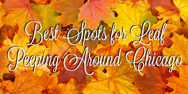 Best Spots for Leaf Peeping Around Chicago