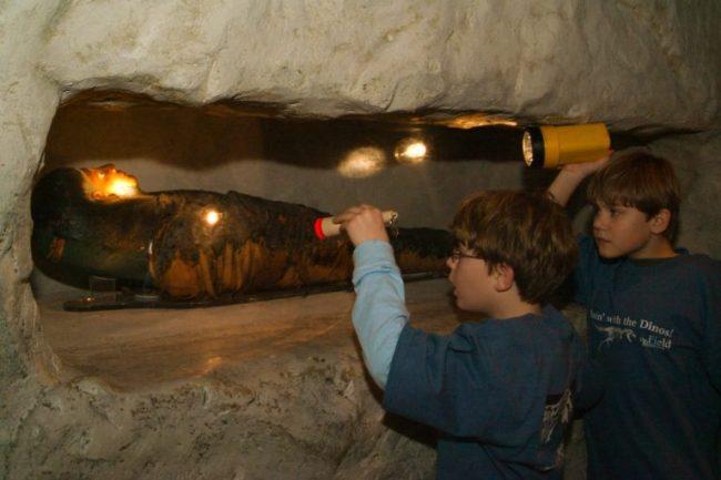 Field Museum - Dozin with Dinos