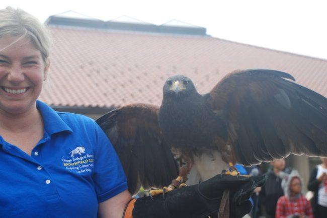 Hawk at Boo! at the Zoo