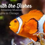 Fish in an aquarium - Museum Overnights in Chicago