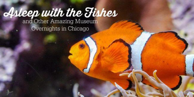 Fish in an aquarium - Museum Overnights in Chicago