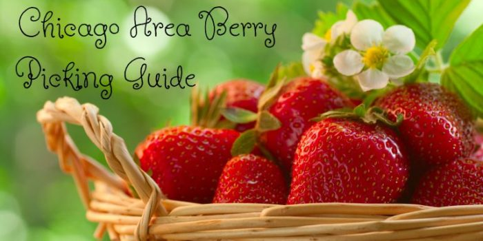 Chicago Area Berry Picking Guide 2018