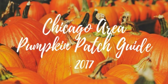 pumpkins at a pumpkin patch - Chicago area pumpkin patch guide 2017