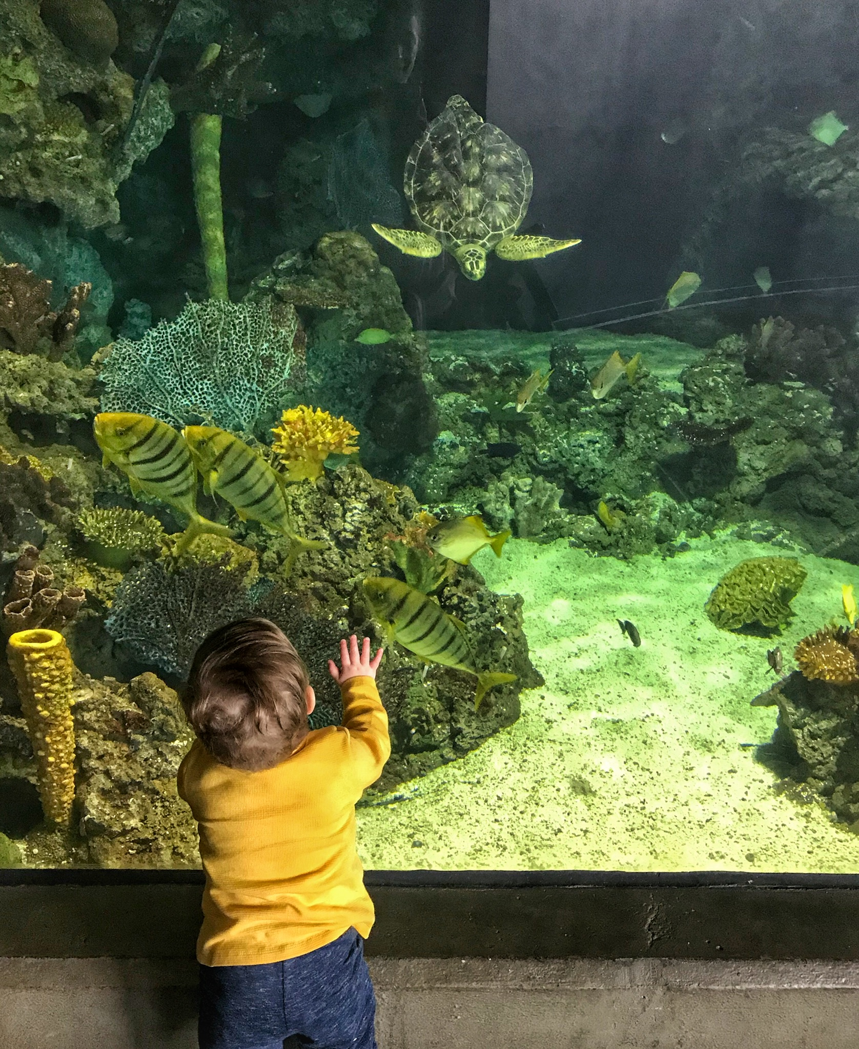 Pittsburgh Zoo Aquarium