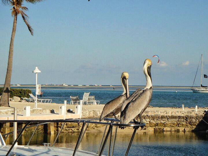 Islamorada Family Vacation Florida Keys with Kids Toddling Traveler