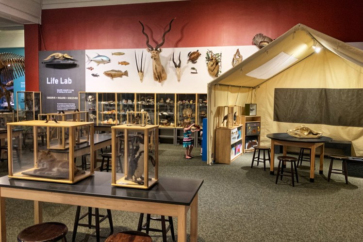 Discovery Base Camp Carnegie Museum of Natural History with kids