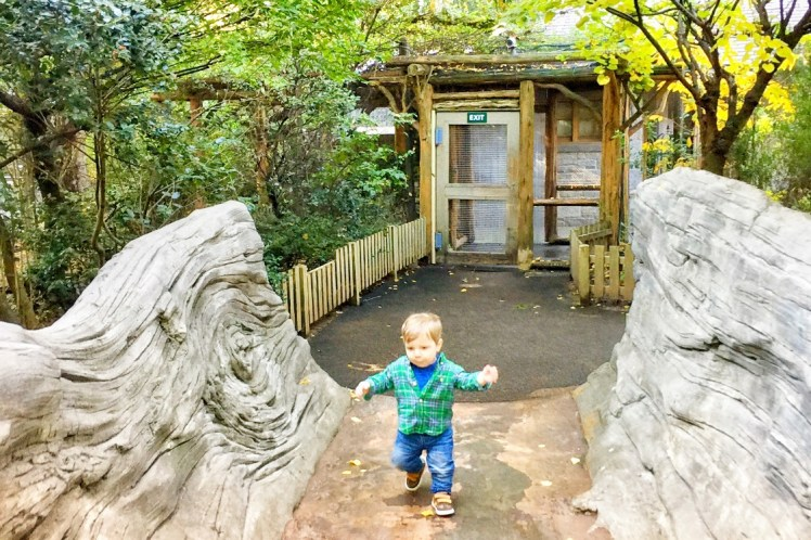 Tisch Children's Zoo Central Park NYC with a Toddler Toddling Traveler