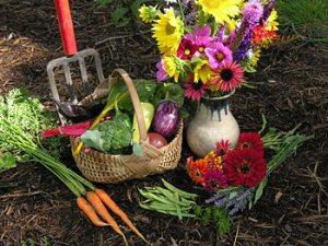 veggie yard
