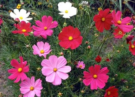 Choosing Seed Varieties For The Late Summer Flower Garden