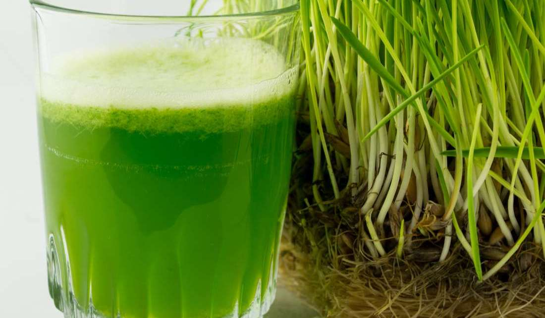 Wheatgrass Juice - Todd's Seeds