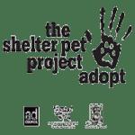 adopt a pet 1
