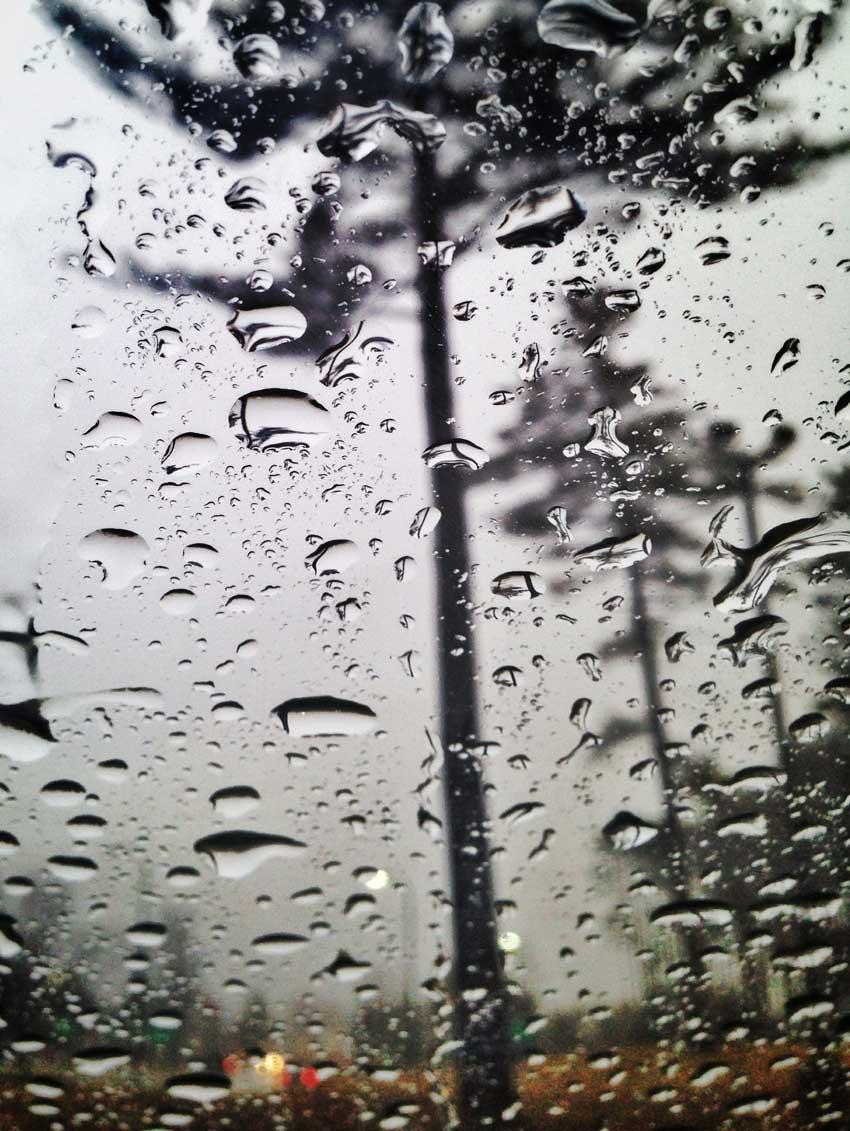 Rain Tree | Todd Waller
