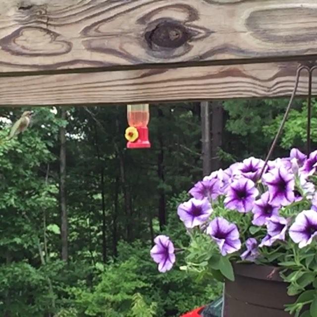 SloMo Hummingbird