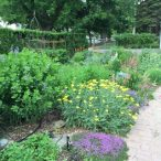 210 N Wallace Ypsilanti MI   Gardens
