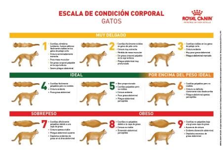 Escala de condición corporal_gato_Royal Canin
