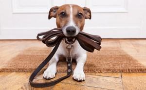 ¿Cómo logro la educación en mi canino?