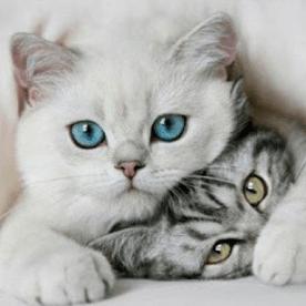 noticia-por-que-se-dice-que-los-gatos-tienen-7-vidas-960.jpg