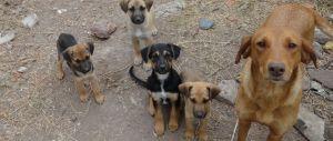 Adoptar, lo de hoy, más de 60% de perros no tienen hogar