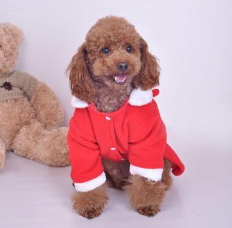 onde-comprar-roupa-frio-cachorro-2