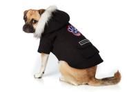 onde-comprar-roupa-frio-cachorro