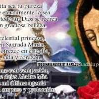 Imágenes de la Vírgen de Guadalupe con frases
