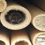 Mason Bee At Home