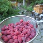 Raspberry pickins