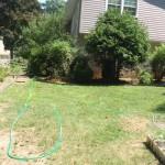 Backyard 2009