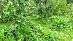 Backyard food forest begins with design 2018