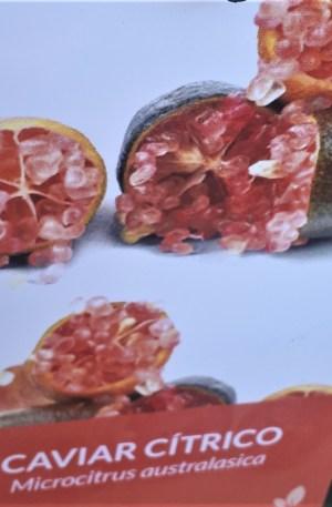 MICROCITRUS AUSTRALASICA caviar citrico rosa