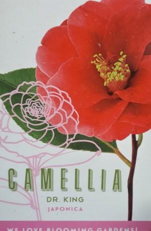 camelia dr king flor roja