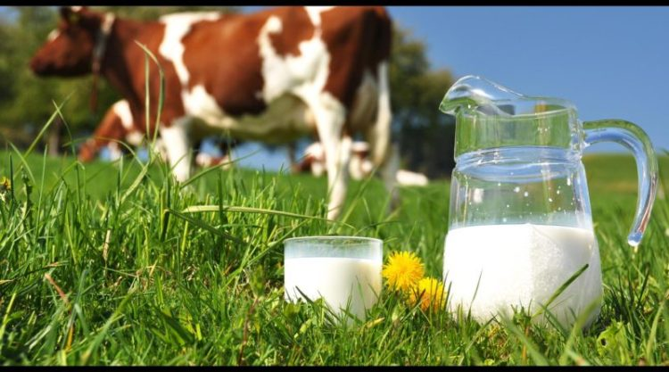 Paises productores de leche de vaca